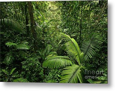 Dense Tropical Rain Forest Metal Print by Matt Tilghman