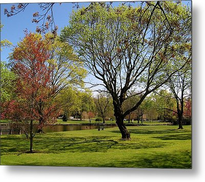 Early Spring Metal Print by John Scates