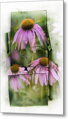 Echinacea Metal Print by Jeff Klingler