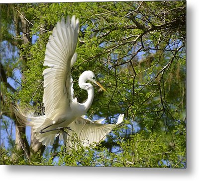 Egret Landing Metal Print