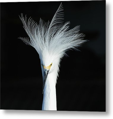 Metal Print featuring the photograph Electrifying by Fraida Gutovich
