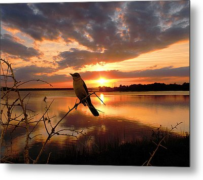Enjoying The Sunset Metal Print