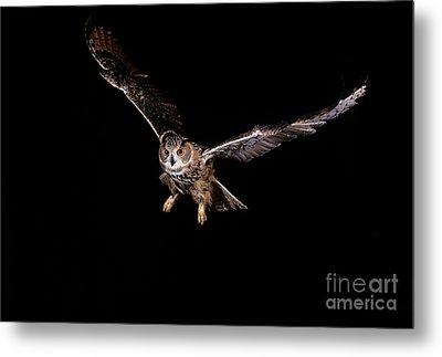 European Eagle Owl Bubo Bubo Metal Print