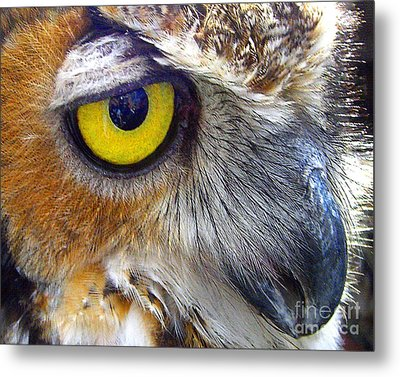 Metal Print featuring the photograph Eye Of The Owl by Merton Allen