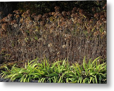 Metal Print featuring the photograph Fall Contrasts by Deborah  Crew-Johnson