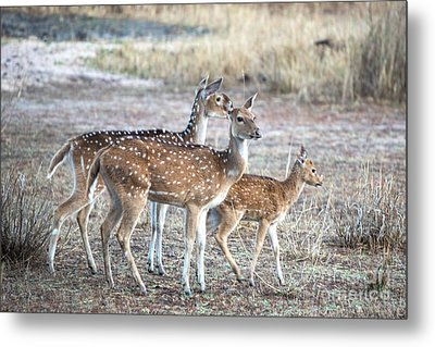 Family Outing Metal Print by Pravine Chester