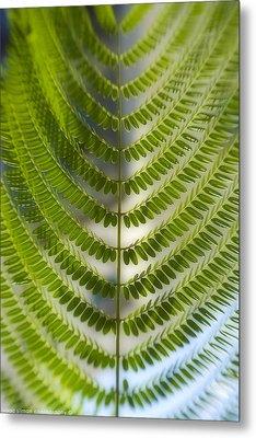 Fern Plant Metal Print by Isaac Silman