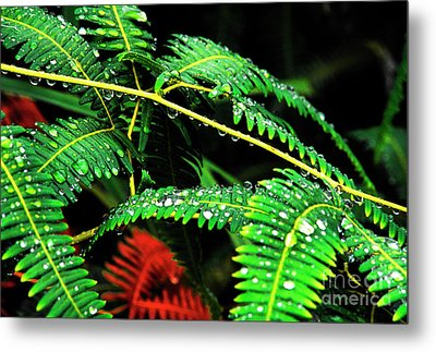Ferns And Raindrops Metal Print by Thomas R Fletcher
