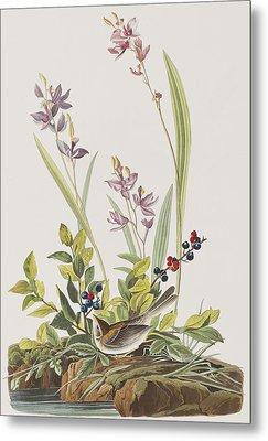 Field Sparrow Metal Print by John James Audubon