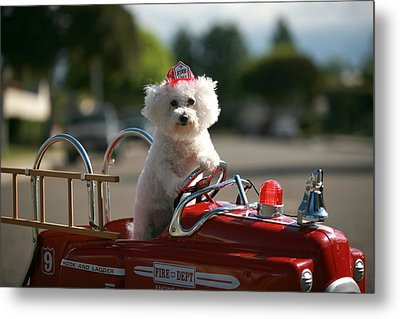 Fifi To The Rescue Metal Print by Michael Ledray