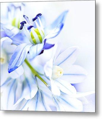 First Spring Flowers Metal Print by Elena Elisseeva