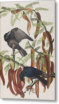 Fish Crow Metal Print by John James Audubon