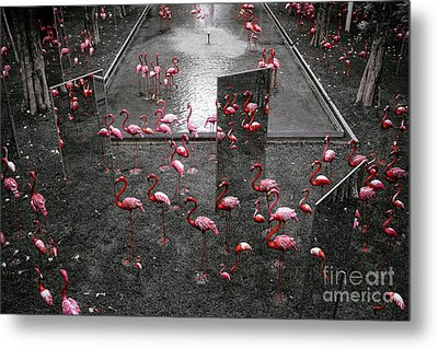 Metal Print featuring the photograph Flamingo by Setsiri Silapasuwanchai