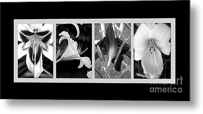 Floral Collage Metal Print by Sue Stefanowicz