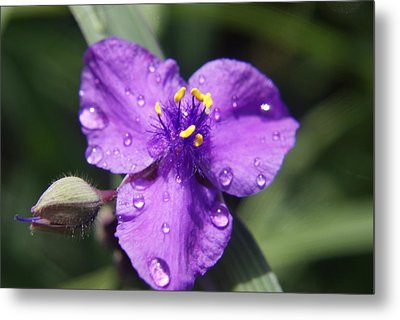 Metal Print featuring the photograph Flower by Heidi Poulin