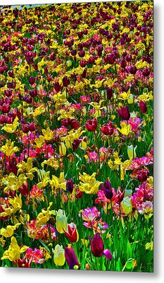 Flowers. Koblenz. Germany. Metal Print by Andy Za