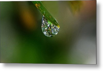 Forest Jewel Metal Print by Marilynne Bull