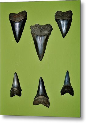 Fossil Mako Shark Teeth Metal Print