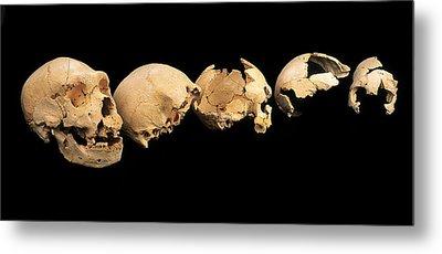 Fossilised Skulls, Sima De Los Huesos Metal Print by Javier Truebamsf