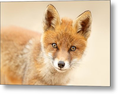 Foxy Face Metal Print by Roeselien Raimond