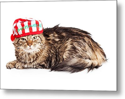 Funny Grumpy Christmas Cat Metal Print by Susan Schmitz