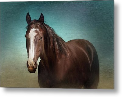 Metal Print featuring the photograph Gentle Soul by Debby Herold