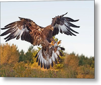 Golden Eagle Metal Print by CR  Courson