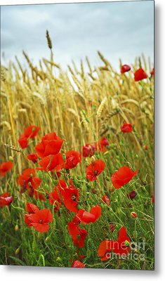 Grain And Poppy Field Metal Print by Elena Elisseeva
