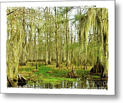 Grand Bayou Swamp  Metal Print by Scott Pellegrin