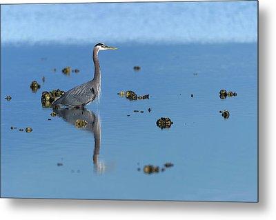 Great Blue Heron Wading Reflection Metal Print