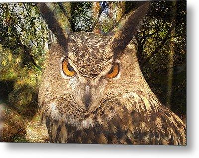 Great Horned Owl 3 Metal Print