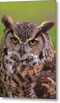 Great Horned Owl Metal Print by Alexander Rozinov