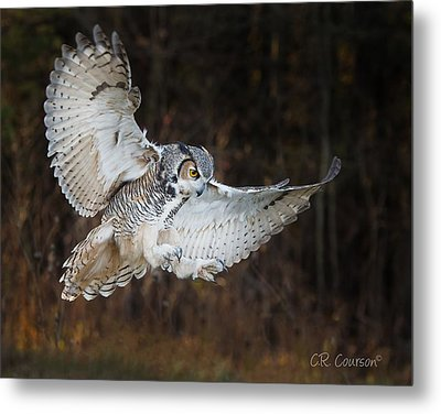 Great Horned Owl Metal Print by CR Courson