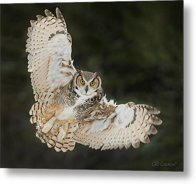 Great Horned Owl Wingspread Metal Print by CR Courson