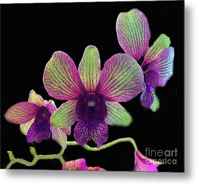 Metal Print featuring the photograph Green And Maroon Orchids by Merton Allen