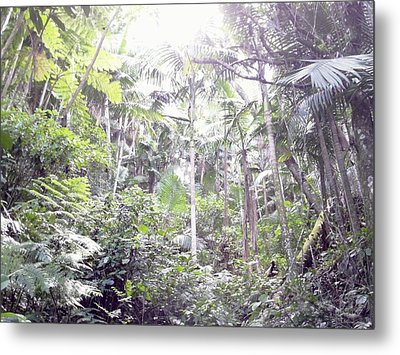 Guilarte's Forest Metal Print