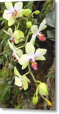 Hanging Orchids Metal Print by Mindy Newman