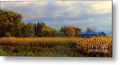 Harvest Metal Print by Elfriede Fulda