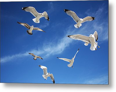 Heavenly Seagulls Metal Print