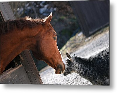 Hello Friend Metal Print by Angela Rath