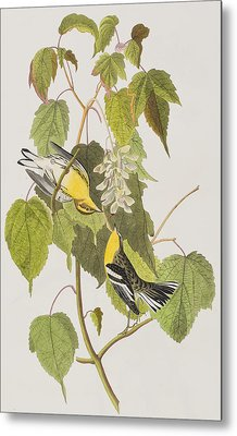 Hemlock Warbler Metal Print by John James Audubon