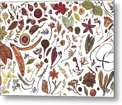 Herbarium Specimen Metal Print by Rachel Pedder-Smith