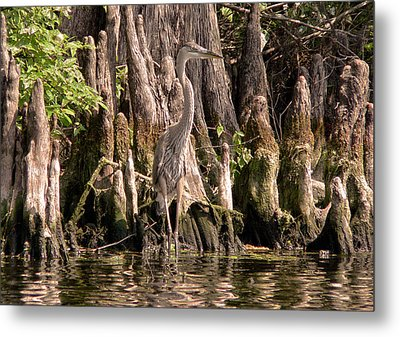 Metal Print featuring the photograph Heron And Cypress Knees by Steven Sparks
