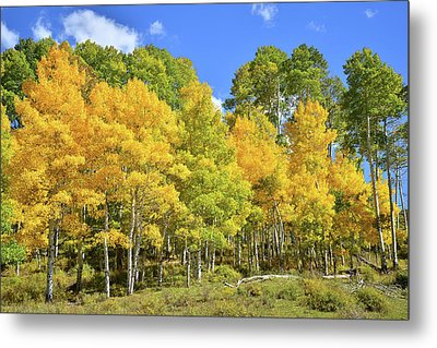 Metal Print featuring the photograph High Country Aspens by Ray Mathis