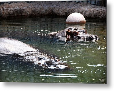 Hippos Metal Print by Thea Wolff