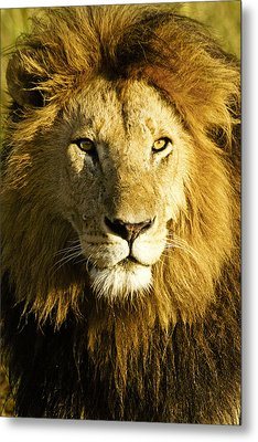 His Royal Highness Metal Print by Michele Burgess