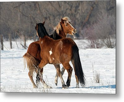 Metal Print featuring the photograph Horseplay by Mike Dawson