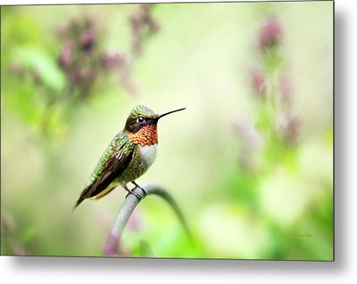 Metal Print featuring the photograph Hummingbird II by Christina Rollo