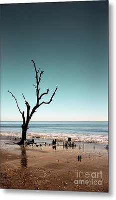 Metal Print featuring the photograph I Can Be Free by Dana DiPasquale