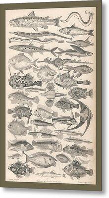 Ichthyology Metal Print by Rob Dreyer